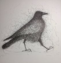 'Walking crow'.